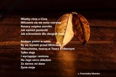 leaf-409258_1920