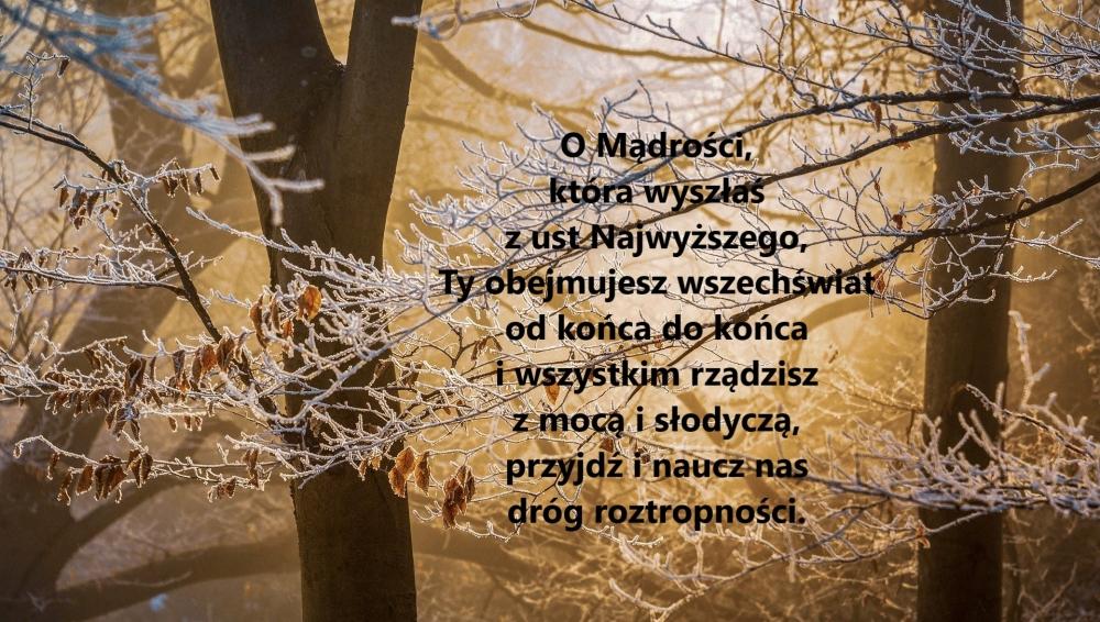 winter-3970434_1920